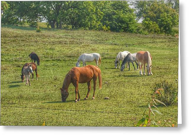 1003 - Horses In A Pasture I Greeting Card