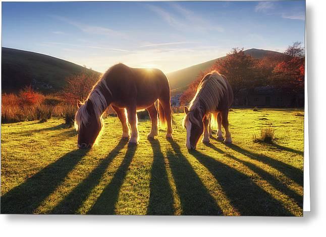 Horses In Austigarmin Greeting Card