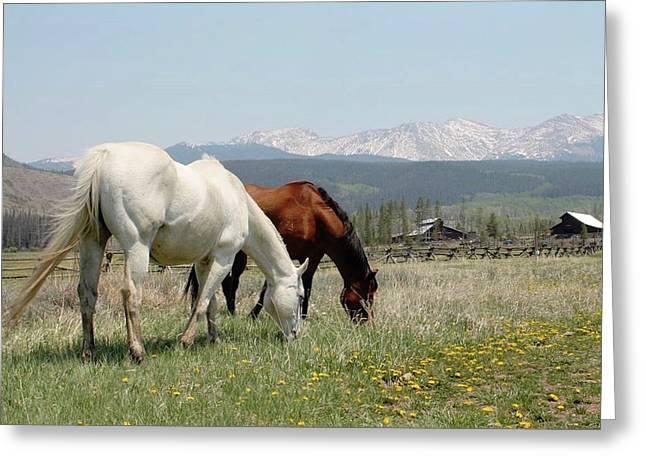 Horses In Colorado Greeting Card
