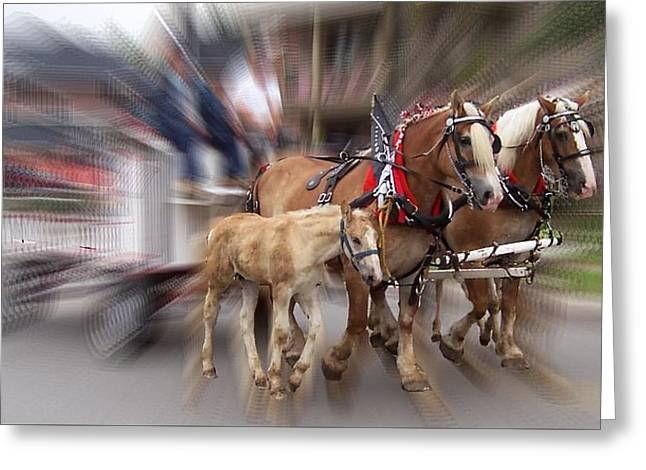 Horses In Motion Greeting Card by David and Lynn Keller