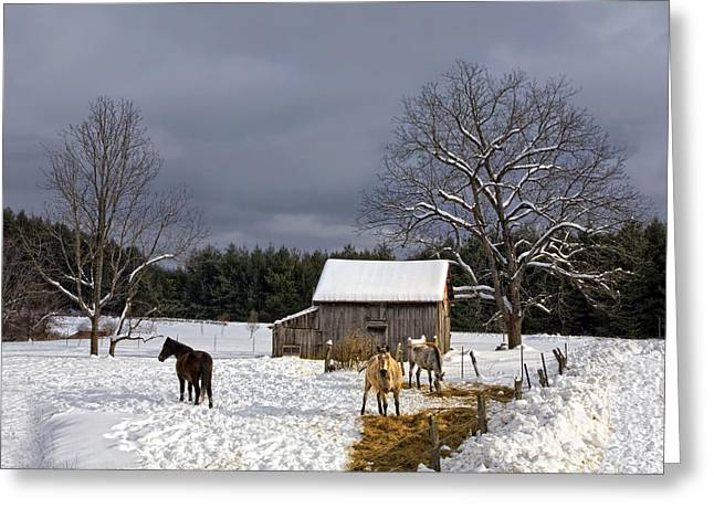 Horses In Snow Greeting Card