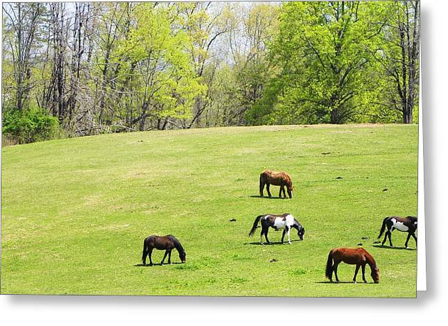 Horses In Spring Greeting Card by Cindy Gacha