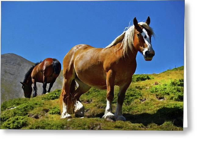 Horses In Sunlight Greeting Card