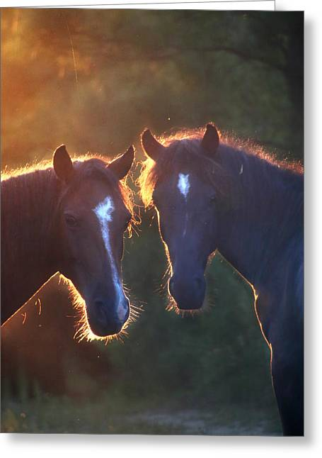 Horses In The Early Morning Greeting Card by Lorella  Schoales