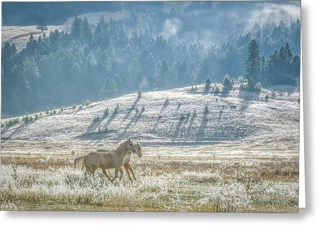 Horses In The Frost Greeting Card