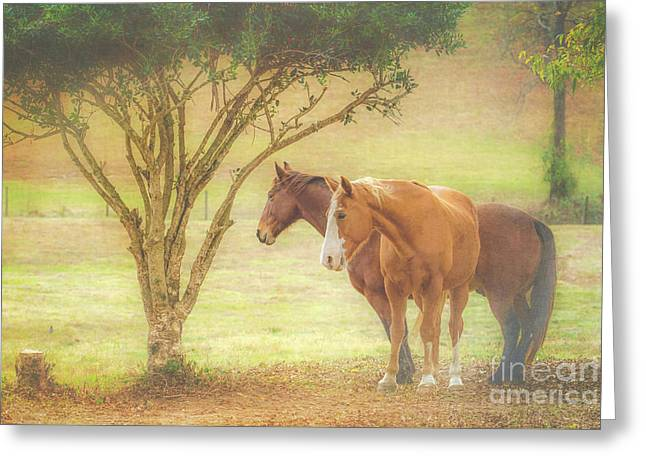 Horses In The Meadow Greeting Card
