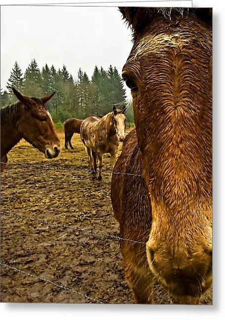 Horses In The Rain Greeting Card by Dale Stillman