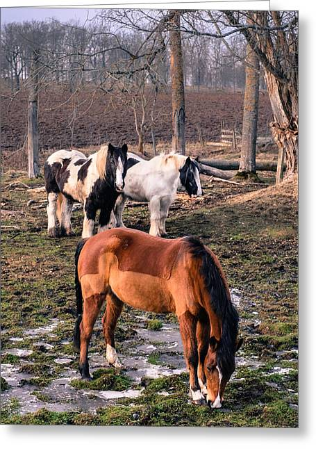 Horses Greeting Card by Jimmy Karlsson