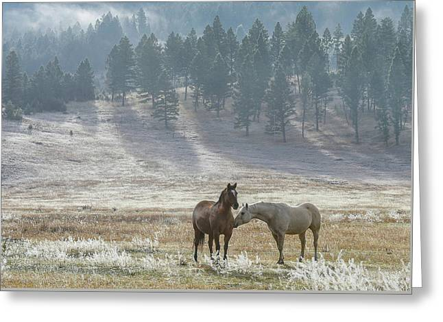 Horses On A Montana Ranch Greeting Card