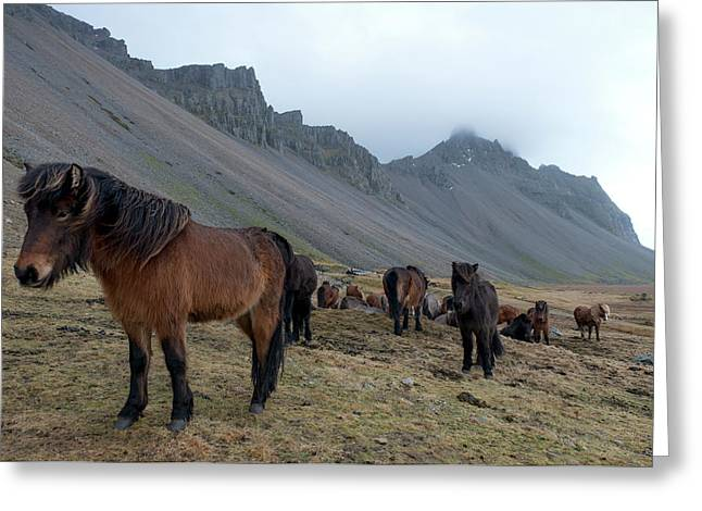 Greeting Card featuring the photograph Horses Near Vestrahorn Mountain, Iceland by Dubi Roman