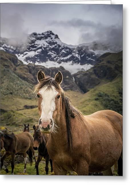 Horses Of Ecuador Greeting Card