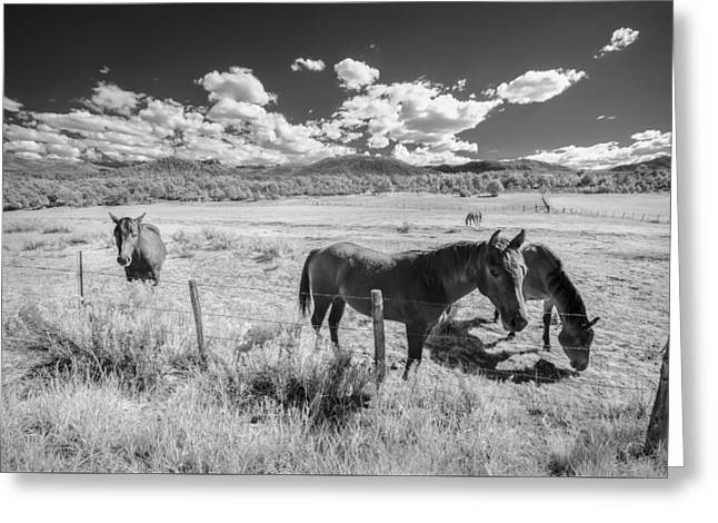 Horses Of San Juan Greeting Card by Jon Glaser