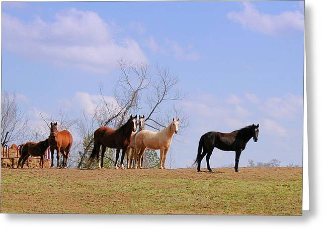 Greeting Card featuring the photograph Horses On The Hill by Bonnie Willis