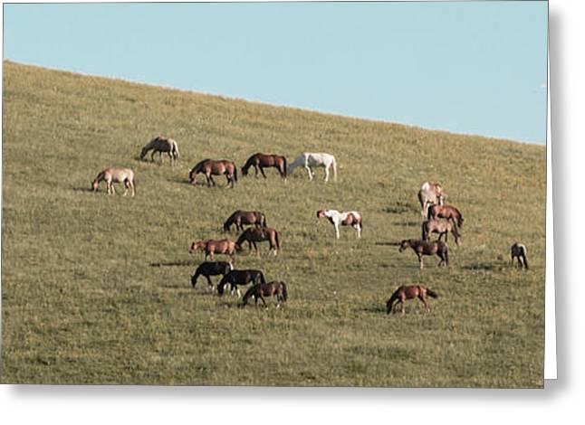 Horses On The Hill Greeting Card