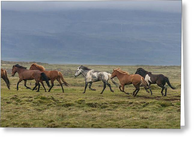 Horses Running In The Countryside Greeting Card by Panoramic Images