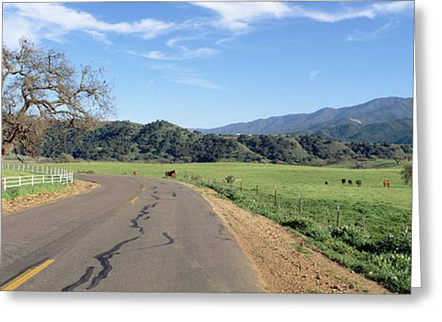 Horses, Santa Ynez Mountains In Spring Greeting Card