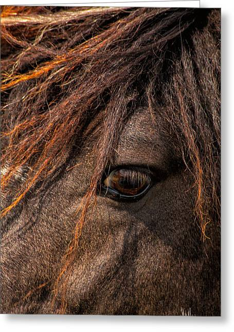 Horses Soul Is Thru The Eye Greeting Card by Karol Livote