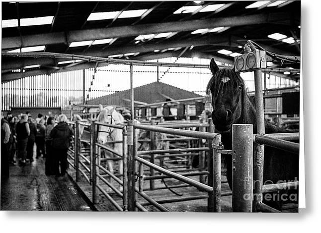 Horses To Be Auctioned At Horse And Livestock Auction Barn Beeston Castle England Uk Greeting Card