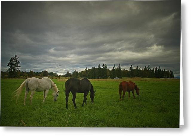 Horses Under Heavy Sky Greeting Card