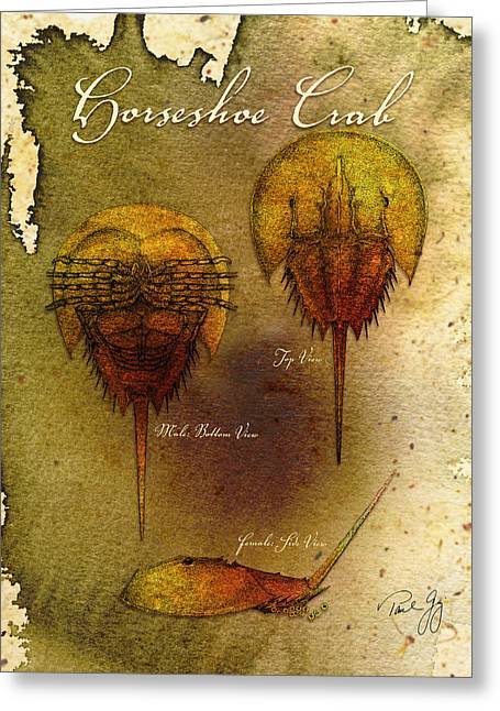Horseshoe Crab Greeting Card by Paul Gaj