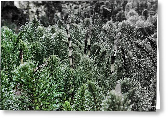 Horsetail Dewpoint Greeting Card