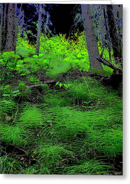 Horsetails Greeting Card by Anne Havard