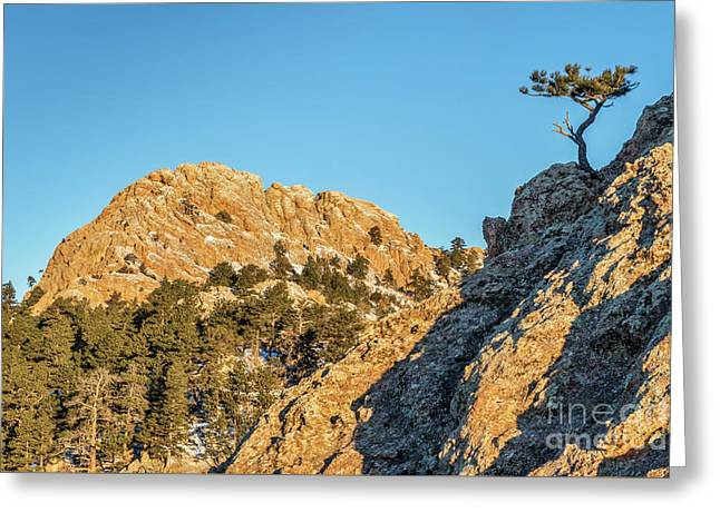Horsetooth Rock And Pine Tree Greeting Card