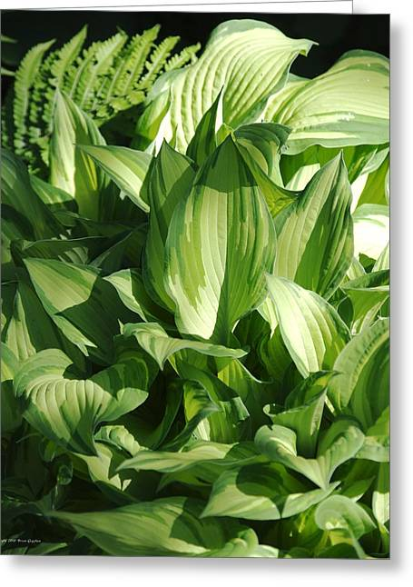 Greeting Card featuring the photograph Hosta 5416 by Brian Gryphon