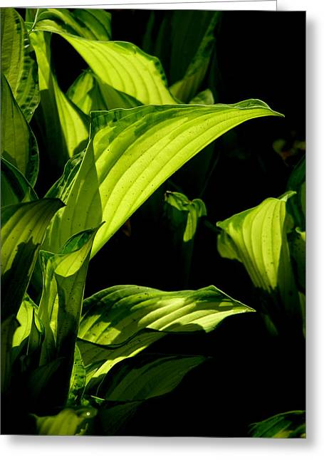 Greeting Card featuring the photograph Hosta 561 by Brian Gryphon