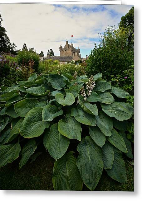 Hosta At Cowdor Castle Greeting Card
