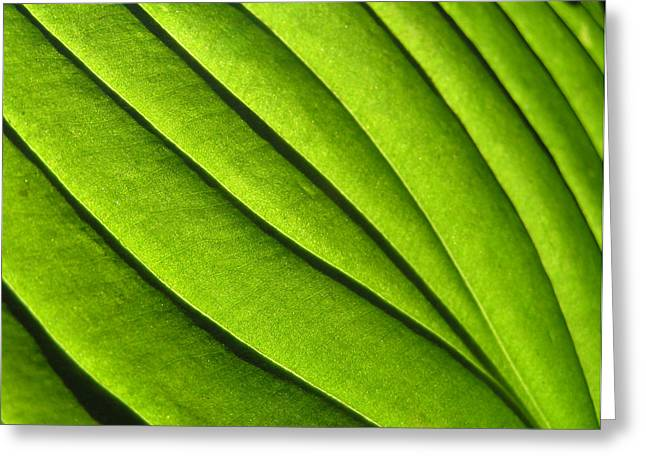 Hosta Leaf 2 Greeting Card