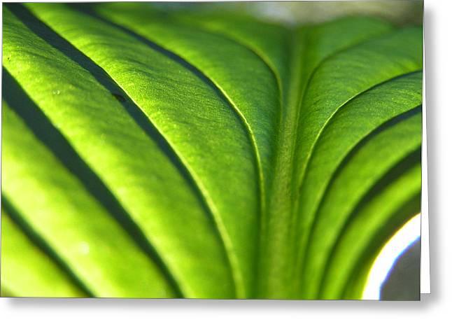 Hosta Leaf 3 Greeting Card
