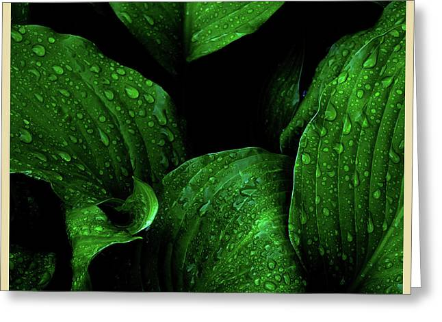Hostas After The Rain I Greeting Card