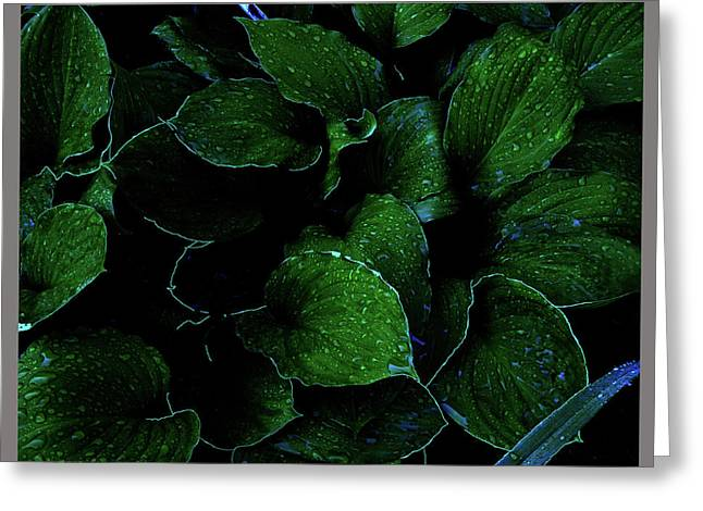 Hostas After The Rain II Greeting Card