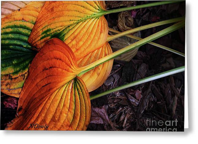 Hostas In Autumn Greeting Card