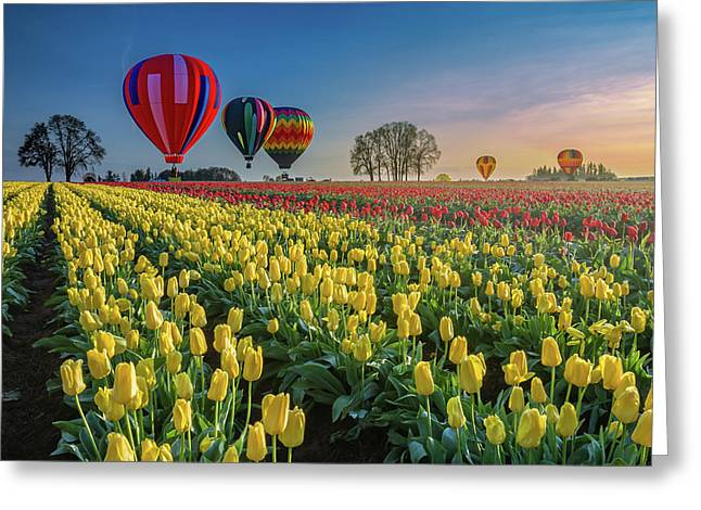 Greeting Card featuring the photograph Hot Air Balloons Over Tulip Fields by William Lee