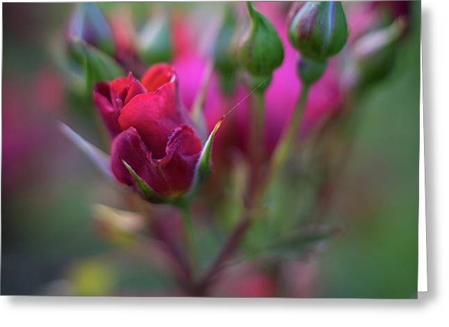 Hot Cocoa Roses Beautiful Greeting Card by Mike Reid
