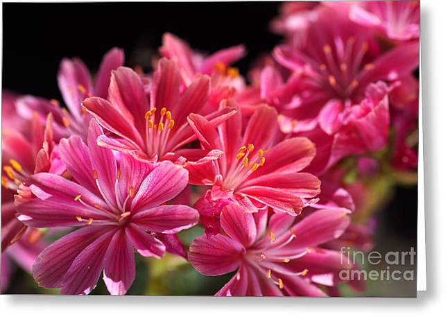 Hot Glowing Pink Delight Of Flowers Greeting Card