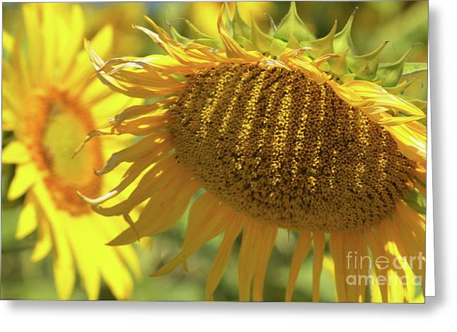 Hot One Greeting Card