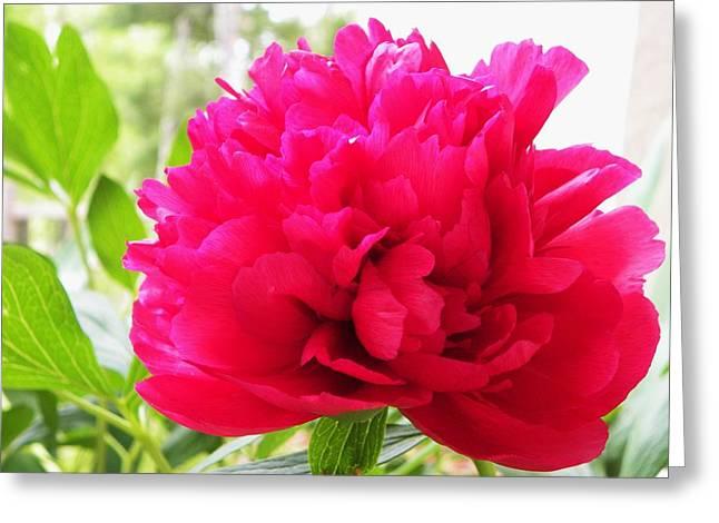 Hot Pink Greeting Card by Cindy Gacha