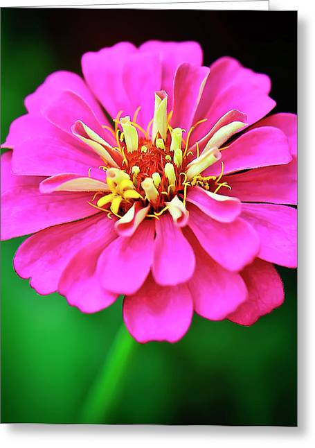 Hot Pink Greeting Card by Michael Putnam
