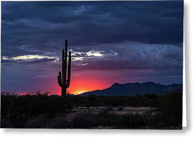 Greeting Card featuring the photograph Hot Pink Saguaro Sunset  by Saija Lehtonen