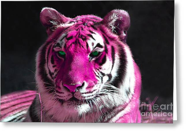 White Fur Greeting Cards - Hot pink Tiger Greeting Card by Rebecca Margraf