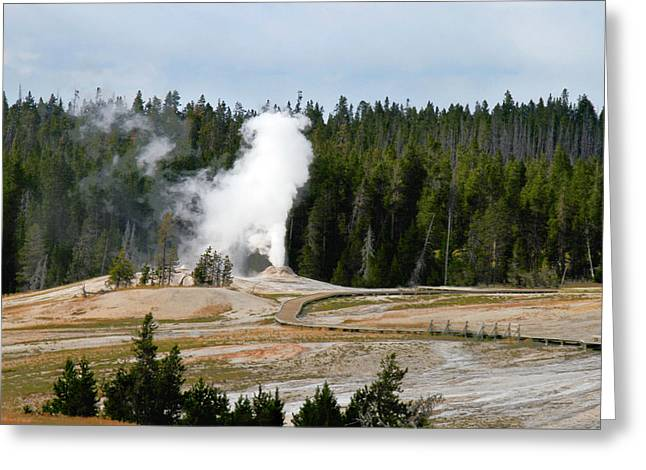 Hot Steam Dog Yellowstone National Park Wy Greeting Card by Christine Till