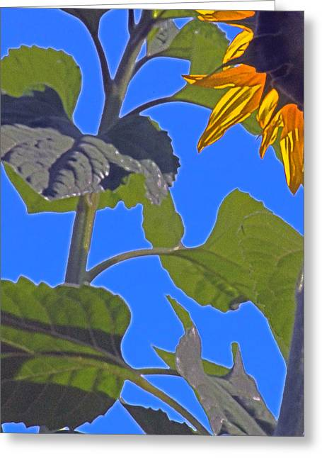 Hot Sunflower Greeting Card by Leslie-Jean Thornton