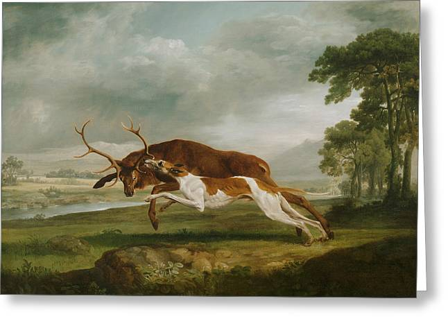Hound Coursing A Stag Greeting Card