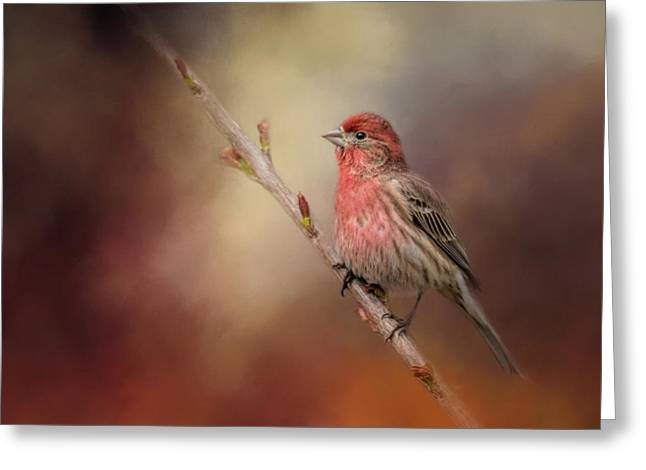 House Finch And New Blooms Greeting Card