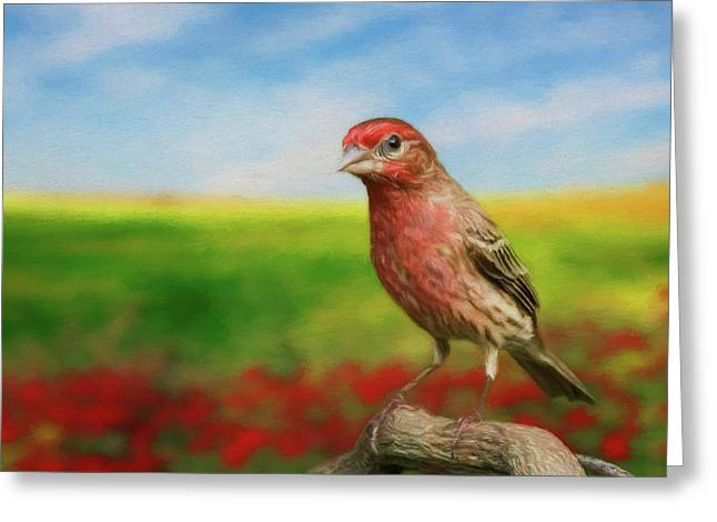 Greeting Card featuring the photograph House Finch by Steven Richardson