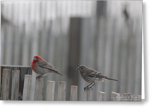House Finches On The Fence Greeting Card