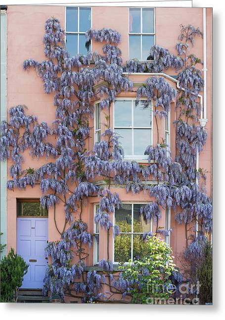 House Of Wisteria Greeting Card by Tim Gainey